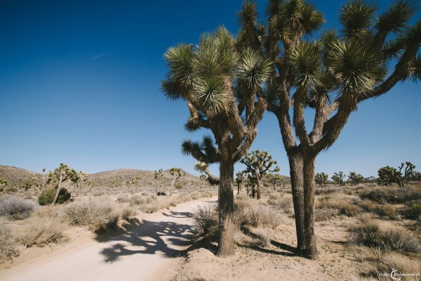 USA | El Centro | Joshua Tree